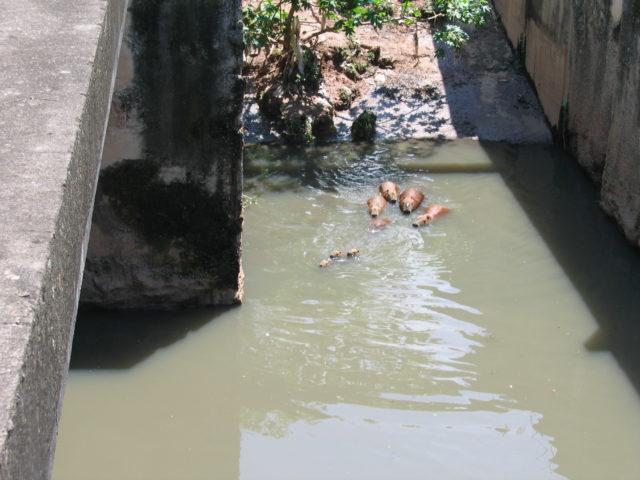 Resíduos líquidos aguas residuales servicio de Urgencias 24h.